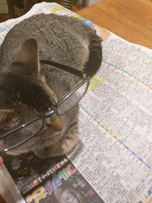 2016眼鏡