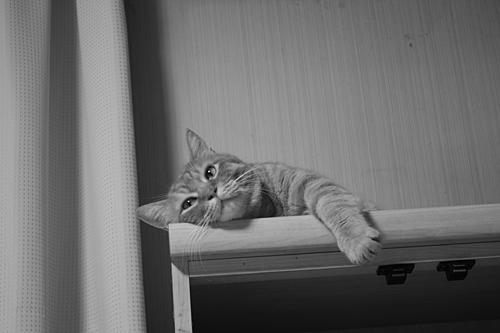 アンニュイな猫