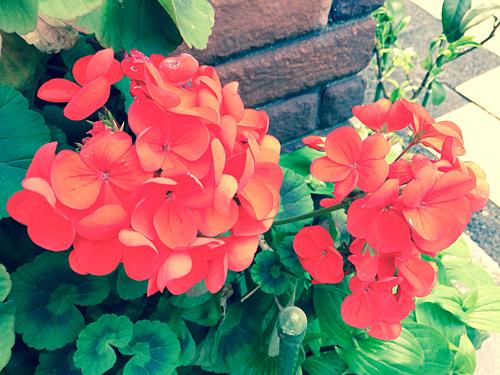 赤い花 2