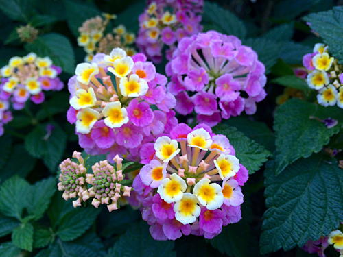 小さな花 1