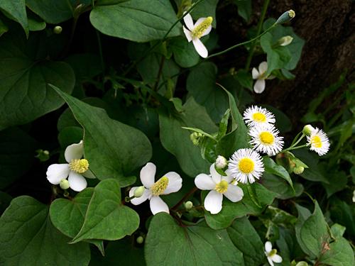 小さな花 3