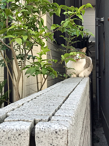 161106 街角猫さん1