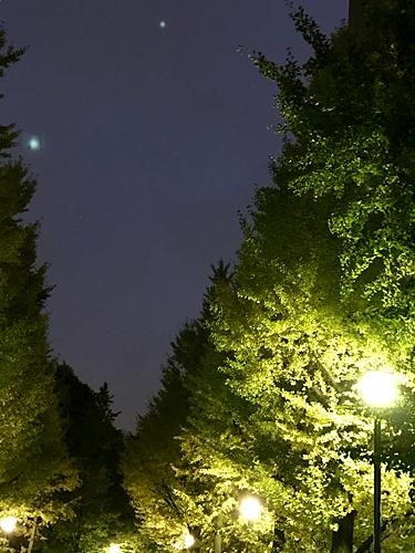 161111 夜の公園