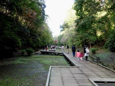 清水渓流公園 木の遊歩道