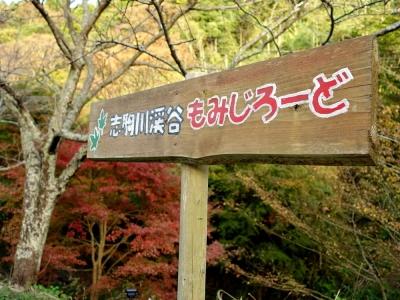 志駒川渓谷もみじロード