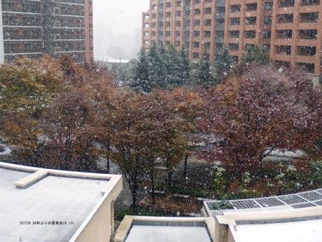 161124 54年ぶりの雪