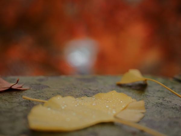 紅葉と落葉03