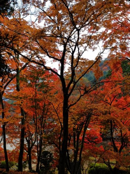 東庭の紅葉