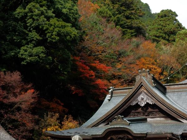 本堂裏の紅葉