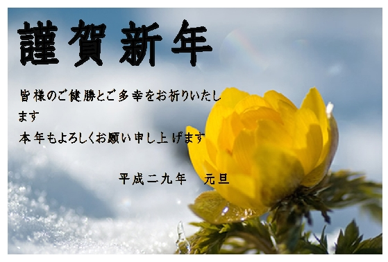 福寿草02