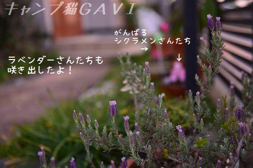 160412_3565.jpg
