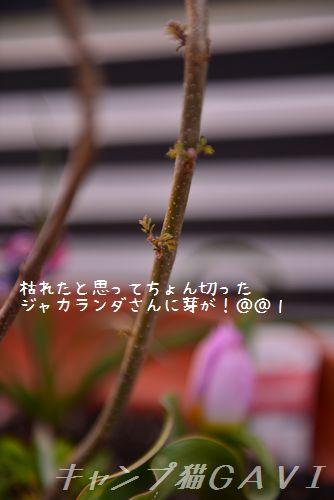 160412_3567.jpg