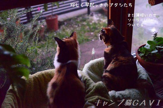 160805_8552.jpg