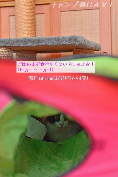 160810_8758.jpg