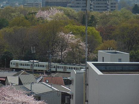 桜の中行くく西武電車