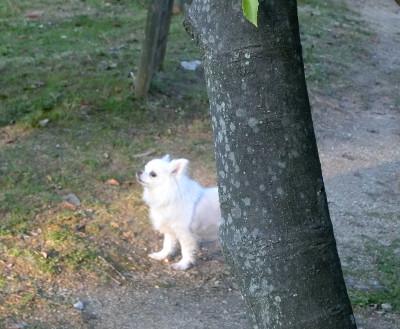 160422-木の影銀ちゃんのと-1