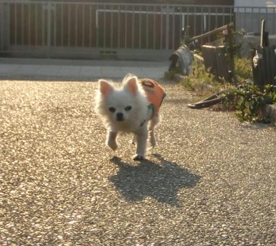 160619-帰りたい銀ちゃん-3