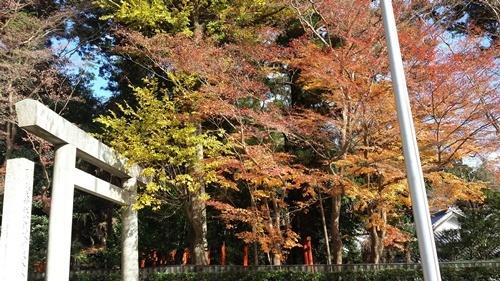 椿神社正門