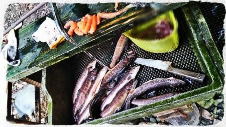 2016 三依渓流釣り場 (7)