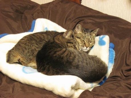 寒い寒いで猫団子