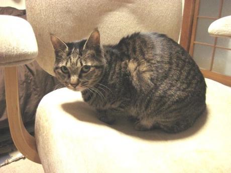 椅子のジンジャー