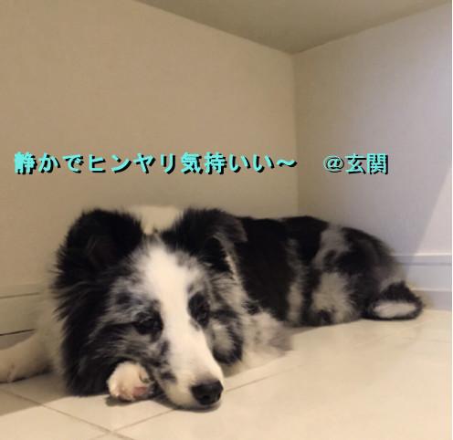 May_dori.jpg