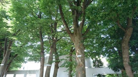 我が家の周辺、保存樹木