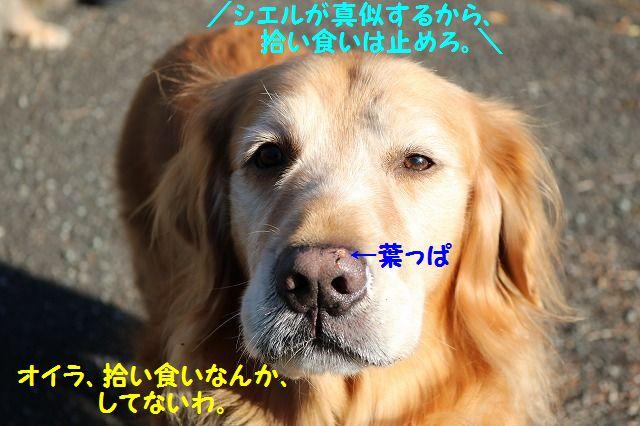 IMG_0151_20161211202601295.jpg