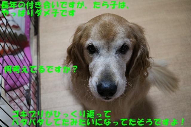 IMG_0177_1.jpg