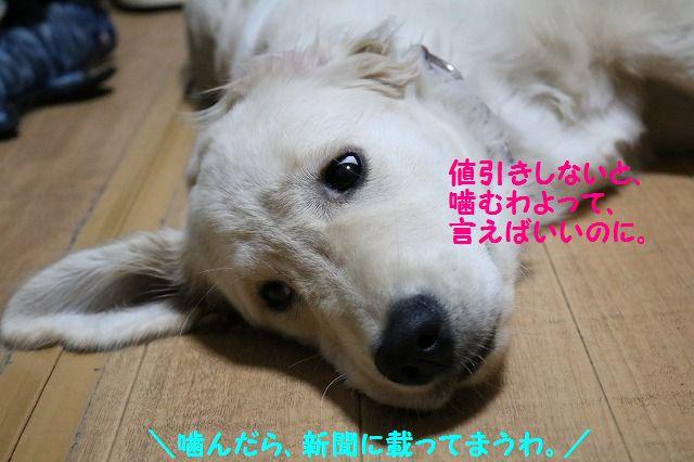IMG_0497_201612162128476c2.jpg