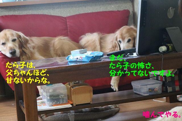 IMG_0645_201612172108585d4.jpg