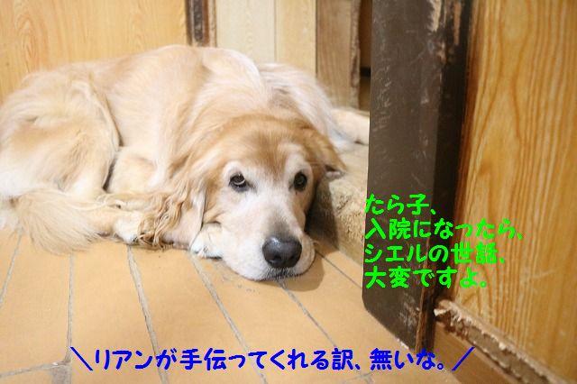 IMG_0891_20161220212823ce1.jpg
