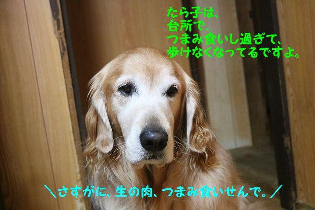 IMG_0997_20161222224011e99.jpg