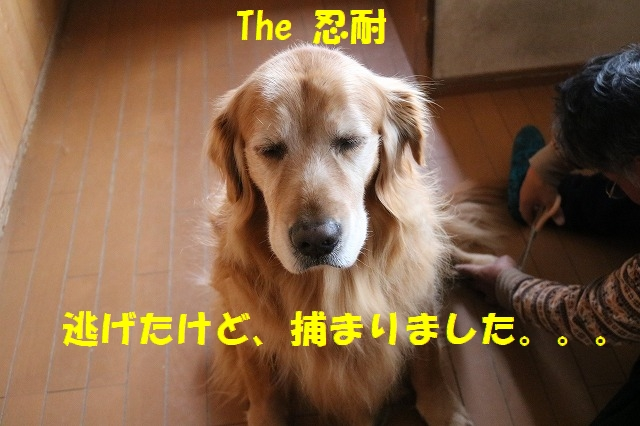 IMG_1082_20161224200126bd3.jpg