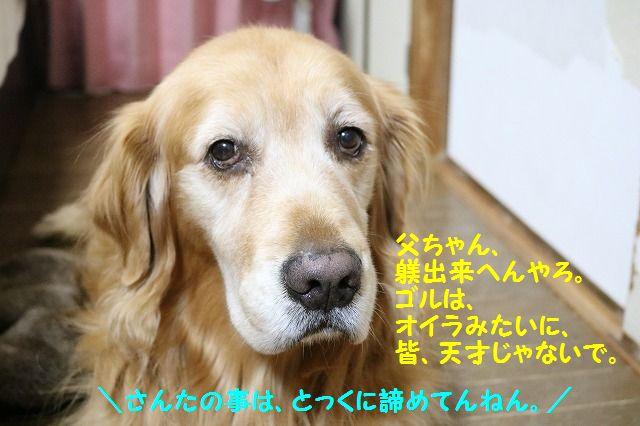 IMG_1273_201612262337144ca.jpg