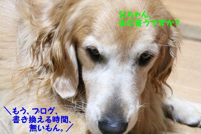 IMG_1430az.jpg
