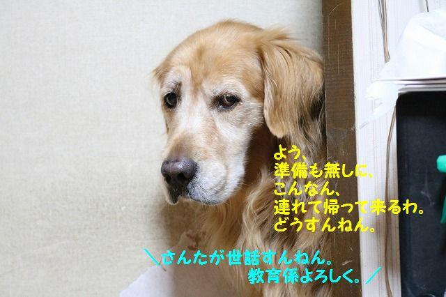 IMG_6215_201610252016408d7.jpg