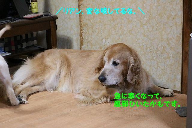 IMG_6729.jpg