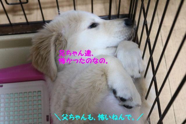 IMG_6820_20161103212119d1f.jpg