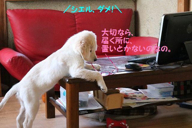 IMG_6872_201612192046180ca.jpg
