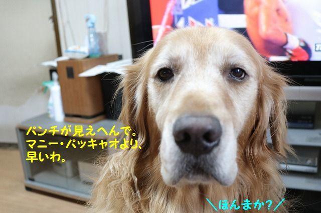 IMG_7145_20161106175507834.jpg