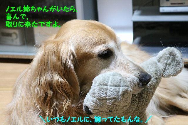 IMG_7308_201611100001135f4.jpg
