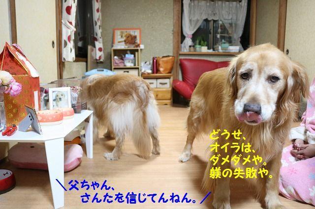 IMG_7326_201611100001332d6.jpg
