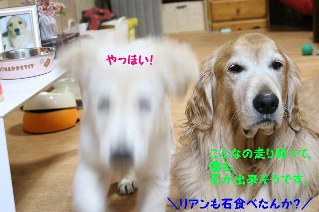 IMG_7371.jpg