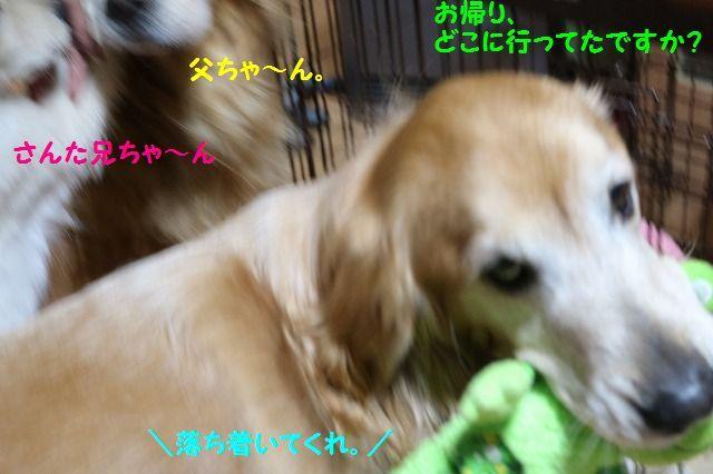 IMG_7380.jpg
