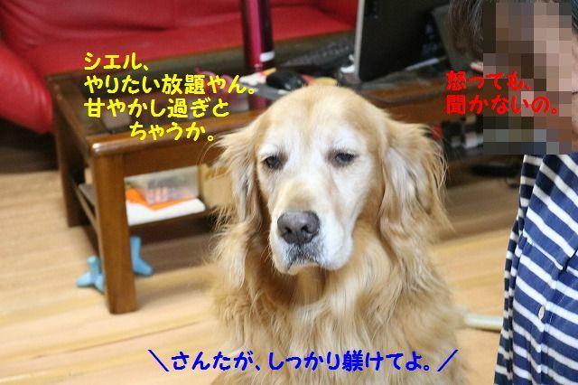 IMG_7412_2016111021570228e.jpg