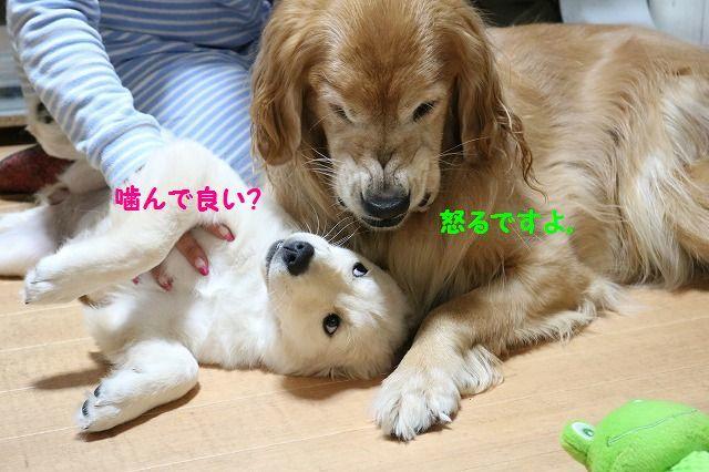 IMG_7553_20161112192839821.jpg
