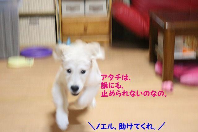 IMG_7763_201611152102563df.jpg