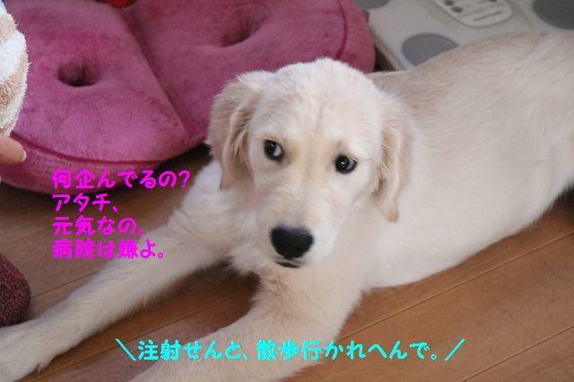 IMG_7974_20161117191907ad9.jpg