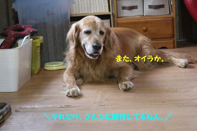 IMG_8160_20161119175035fba.jpg